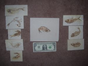fishes bent small