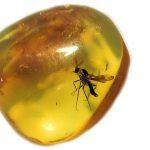 amber mygga2 0