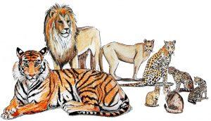 Huskatt kattdjur halvcirkel 1